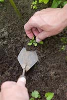 Weeding using a trowel