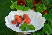 Picked strawberries and alpine strawberries on vintage china plate