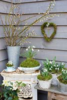Galanthus nivalis - Snowdrops displayed in vintage china, heart wreath and containers with Salix - pussywillow
