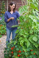 Step by step - Growing climbing French beans 'Fasold' - woman picking beans