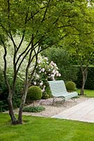 Wooden garden bench painted in grey-blue framed with trees, Buxus - Box spheres a hedge and Rosa 'Fritz Nobis', Amelanchier lamarckii, Crambe cordifolia and Vinca - Germany
