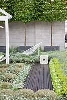 Acer campestre, Euphorbia 'Silver Swan', Convolvulus cneorum, Galium odoratum, Stachys byzantina 'Silver Carpet' - The Rooftop Workplace of Tomorrow garden - RHS Chelsea Flower Show 2012