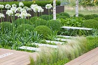 Modern garden with Buxus sempervirens, Agapanthus umbellatus 'Albus' and Stipa tenuissima