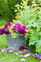 Old roses with Alchemilla mollis displayed in metal bucket on grass. Varieties include Rosa 'Rose de Rescht' and 'Reine de Violettes'
