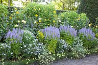 Perennial border with Agastache 'Blue Fortune', Helenium 'Double Trouble', Kalimeris incisa 'Blue Star', Coreopsis 'Moonbeam', Helianthus 'Triomphe de Gand'