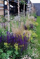 Salvia and grasses along fence with betula and reclaimed timber boards. 'Light At The End Of The Tunnel', Hampton Court Palace Flower Show 2012