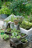 Herbs and succulents in containers on patio