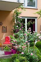 Terrace with wicker seat, pink watering can and container plantings of Buxus, Clematis, Geranium sanguineum and Rosa