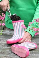 Step by step of planting a pair of recycled kids wellies with Diascia 'Little Dancer' - Filling wellies with compost