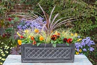 Autumn Winter trough with Red Cordyline, Variegated Carex and Orange Viola - The finished container