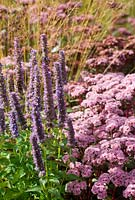Late summer border with Agastache 'Blue Fortune' and Sedum matrona - RHS Wisley