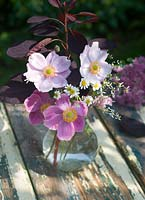 Autumn arrangement of cut flowers - Japanese Anenome, Cotinus coggygria 'Royal Purple' and feverfew