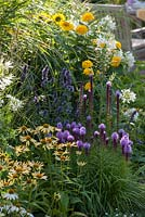 Summer border with Agastache 'Summer Blow', 'Blue Fortune', Echinacea 'Meringue' 'Avalanche' and 'Sunrise', Liatris, Achillea, Cleome 'Spinosa', Helianthus decapetalus and Miscanthus