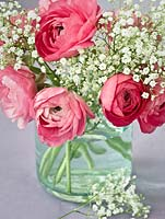 Pink ranunculus and Gypsophila in glass vase