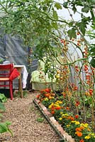 Tomatoes growing in the polytunnel, bed edged with French marigolds - Cavick House Farm, Norfolk