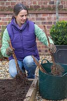 Planting Bare Root Raspberry 'Glen Magna'