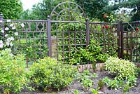 Wooden trellis in mature garden with Rosa and Clematis and mixed bed with Skimmia, Camellia and Azalea and young herbaceous plants