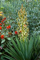 Yucca gloriosa in the exotic garden