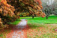 The Maple Walk - John F Kennedy Arboretum, New Ross, Co. Wexford, Ireland. Established 1968. Managed by the Office of Public Works