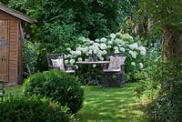 In a shaded garden next to summerhouse, a rest area with two wicker armchairs with cushions and a bistro table. White flowering Hydrangea arborescens 'Annabelle', Buxus, Clematis and Philadelphus