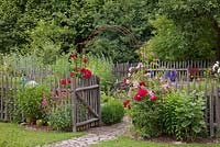 Entrance to a picket fenced garden in traditional German country garden. Rosa 'Super Dorothy', 'Sympathie', Centranthus ruber 'Coccineus' and Delphinium