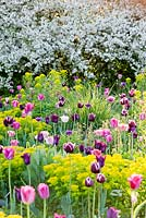 Mixed spring border