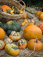 Harvested pumpkins and squashes on display at The Savill Garden, Windsor