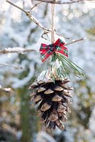 Snowy cone decorated with ribbon displayed hanging on branch