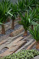 Agave planted in dry slate stone bed
