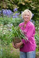 Carol Klein holding container of Agapanthus campanulatus in a border