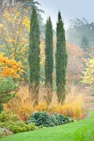 Cupressus sempervirens 'Totem Pole' with Acer x hilleri 'Summer Gold' in Autumn mixed border at Foggy Bottom, The Bressingham Gardens, Norfolk, UK.
