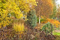 Mixed Autumn border in Adrian's Wood, The Bressingham Gardens, Norfolk, UK.