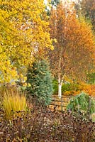 Mixed Autumn border in Adrian's Wood, The Bressingham Gardens, Norfolk, UK. Portrait of autumn colour and seedheads.