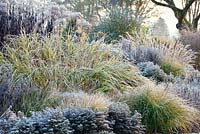 Mixed Perennial and Ornamental Grass border in The Summer Garden in November, Winter. Bressingham Gardens, Norfolk, UK.