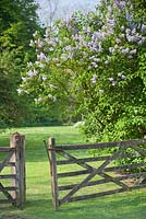 Open five bar gate and Lilac at Wretham Lodge, Norfolk