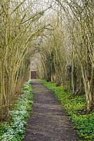 Hazel Tunnel - Nut walk with snowdrops and winter aconites