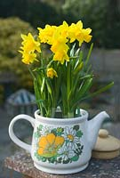 Vintage teapot with Narcissus 'Tete a Tete'