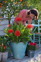 Woman tending exotic container plants