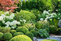 Shady planting with a group of box spheres, Acer palmatum, Astilbe, Buxus, Hosta, Hydrangea arborescens 'Annabell', Matteucia struthiopteris, Rhododendron and Thuja
