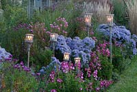 Lanterns in border of Aster and Penstemon