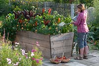Woman watering a raised, wooden bed full of annuals and vegetables