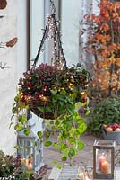 Hanging basket of Vinca reticulata, Gaultheria and Erica darleyensis decorated with fairy lights