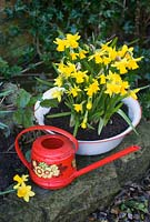 Narcissus 'Tete a Tete' with vintage garden tools