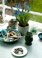 Muscari pot in conservatory with seashells and driftwood