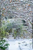 View of formal town garden with path to garden gate in winter with Box edging and rose hips of Rosa 'Meg' growing over garden arch - Rhadegund House, New Square, Cambridge
