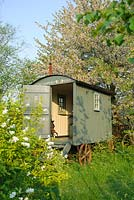 Shepherds hut in wild garden with Prunus avium  behind and Exochorda x macrantha 'The Bride' in foreground - The Mill House, Little Sampford, Essex