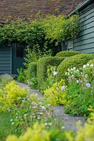 Path leading to back door with box topiary, Alchemilla mollis, Geraniums and Erigeron karvinskianus - The Mill House, Little Sampford, Essex