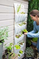 Step by step -  Planting vertical shoe holder with fruit and vegetables