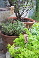 Containers of herbs with recycled corks as plant labels - Thyme and Parsley