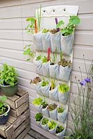 Step by step for planting vertical shoe holder with fruit and vegetables - colourful labeling